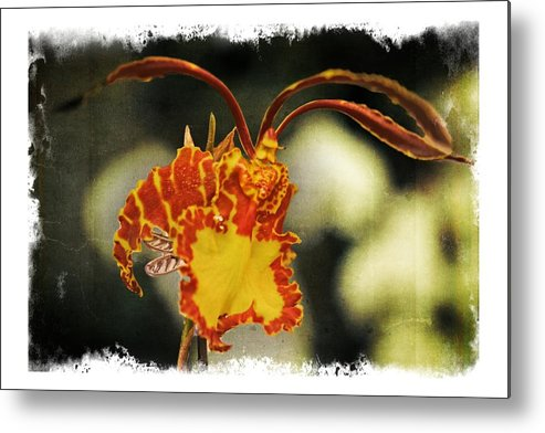 Orchid Metal Print featuring the photograph Orchid 16af by Richard Xuereb
