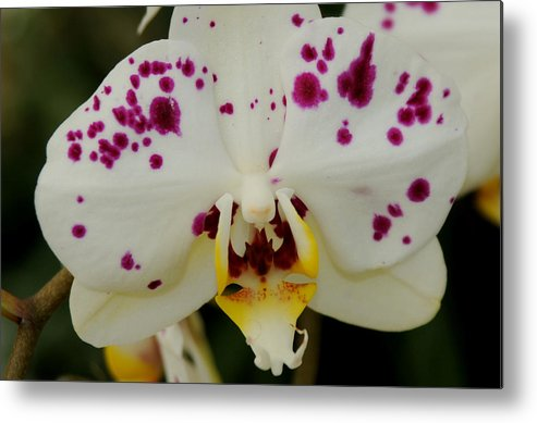 Metal Print featuring the photograph Orchid by Patrick Short