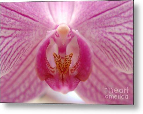 Orchidea Metal Print featuring the photograph Orchidea by Miguel Celis