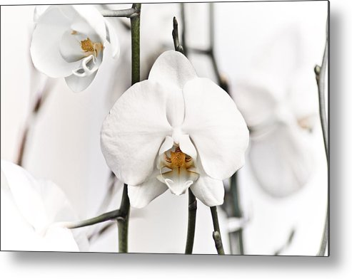 Floral Metal Print featuring the photograph Orchids by John Ater