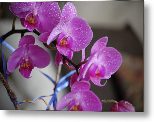 Photo Flowers Metal Print featuring the photograph Orchids by Kevin Stevens
