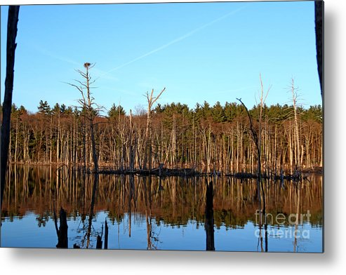 Nature Metal Print featuring the photograph Osprey Domain by James F Towne