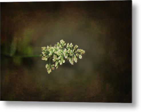 Flower Metal Print featuring the photograph Out Of The Fog by Rozalia Toth