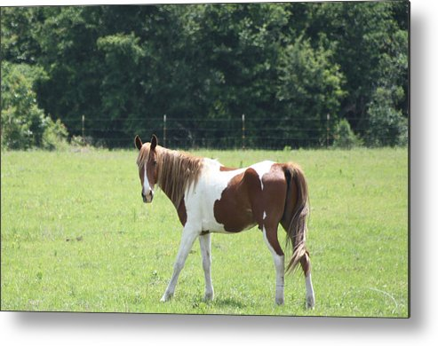 Horses Metal Print featuring the photograph Painted Beauty by Paula Coley