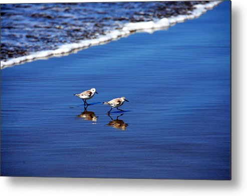 Birds Metal Print featuring the photograph Pair by Michael Brown