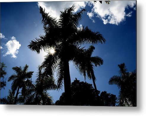 Palm-trees Metal Print featuring the photograph Palm Trees In Silhouette by Reva Steenbergen