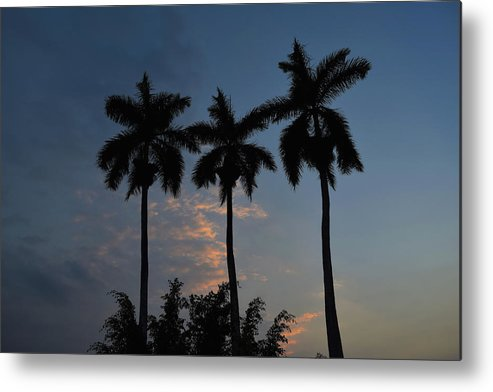 Palmeras Metal Print featuring the photograph Palmeras Ahuachapan by Totto Ponce