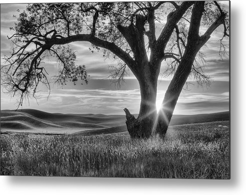 Washington State Metal Print featuring the photograph Palouse Sentinel - Black And White by Mark Kiver