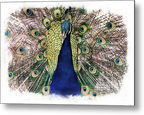 Alicegipsonphotographs Metal Print featuring the photograph Peacock Vignette by Alice Gipson