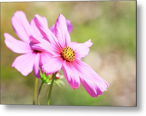 Flower Metal Print featuring the photograph Pedals by Steve McKinzie