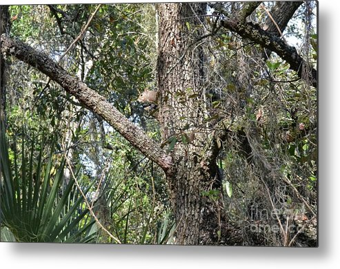 Trees Metal Print featuring the photograph Peek A Boo by Carol Bradley