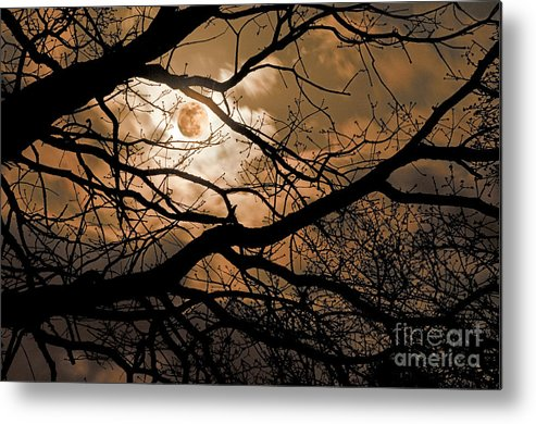 Moon Metal Print featuring the photograph Perigee Moon In The Trees by Tamyra Ayles