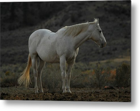 Horse Metal Print featuring the photograph Pierre by Donna Blackhall