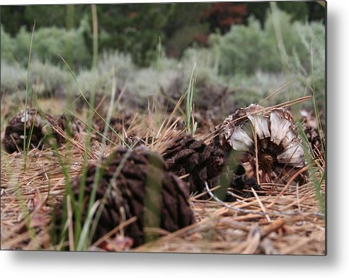 Pine Cone Metal Print featuring the photograph Pine Cone by Eliza Runion