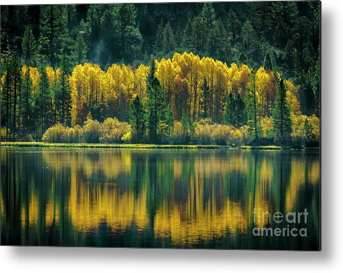 Carl Jackson Metal Print featuring the photograph Pines And Aspens by Carl Jackson