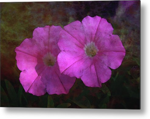 Pink Metal Print featuring the photograph Pink And Gold 6156 Dp_2 by Steven Ward