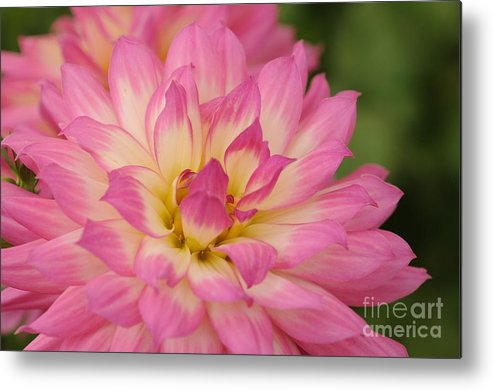 Flower Metal Print featuring the photograph Pink Flower by Dot Lestar