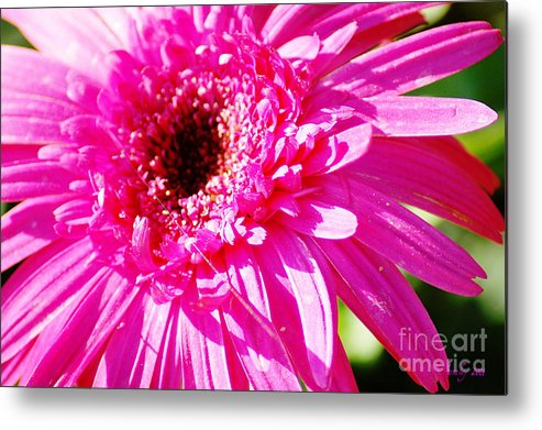 Pink Metal Print featuring the photograph Pink Gerber by Donna Bentley