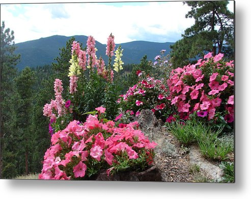 Pink Metal Print featuring the photograph Pink On The Mountain by Jody Neumann