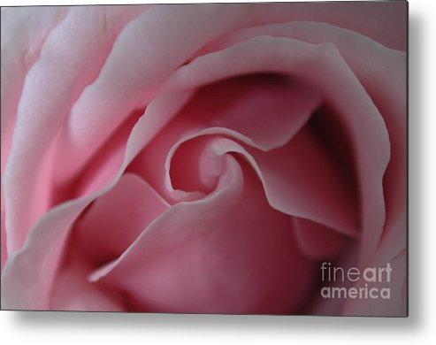 Flower Metal Print featuring the photograph Pink Rose Swirl by Kathi Shotwell