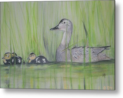 Pintail Ducks Metal Print featuring the painting Pintails In The Reeds by Debra Sandstrom