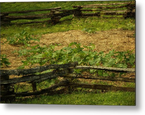 Fence Metal Print featuring the photograph Pioneer Gardening by Tingy Wende