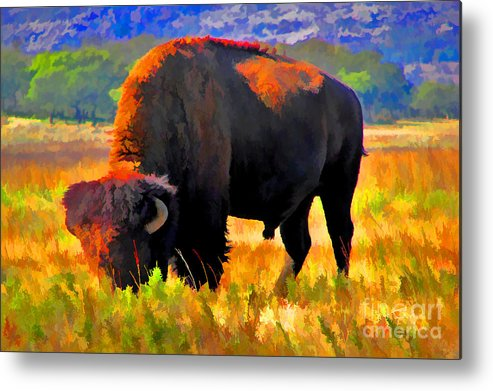 Bison Metal Print featuring the photograph Plains Buffalo by JohnD Smith