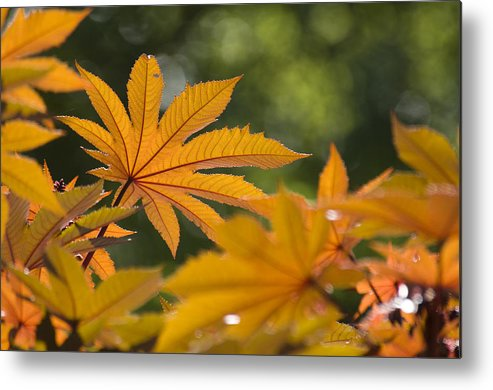 Plant Metal Print featuring the photograph Plants Of Beauty by Chad Davis