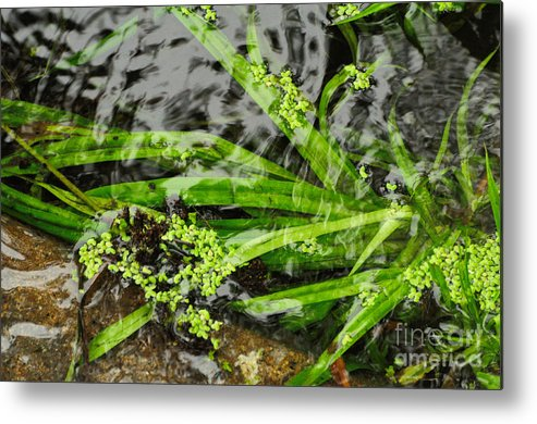 Pond Metal Print featuring the photograph Pond Abstract II by Merrimon Crawford