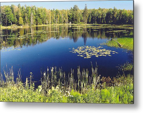Pond Metal Print featuring the photograph Pond To Ponder by Greg Taylor