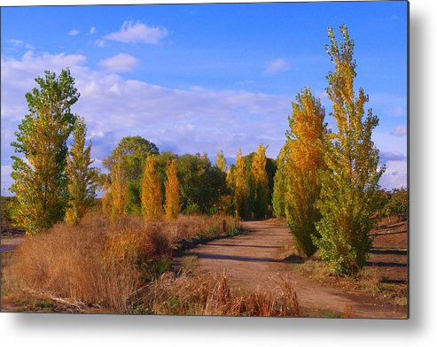 Poplar Metal Print featuring the photograph Poplar Lane by Michael Allred