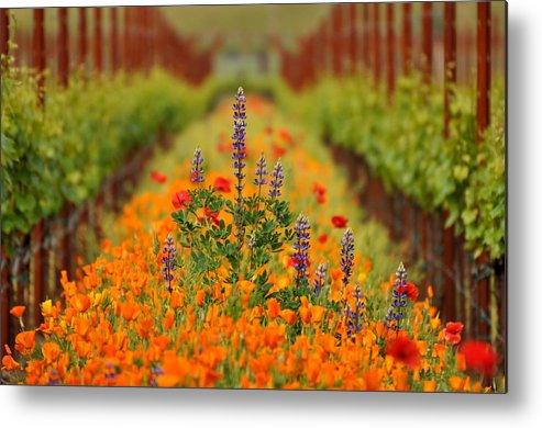 Vineyard Metal Print featuring the photograph Poppies And Wildflowers In Vineyard by Pamela Rose Hawken
