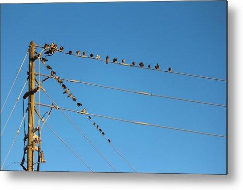 Flock Of Birds Metal Print featuring the photograph Power Line Birds by Cynthia Guinn