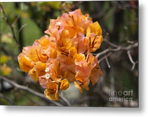 Hawaii Metal Print featuring the photograph Pretty Flower by Dick Willis