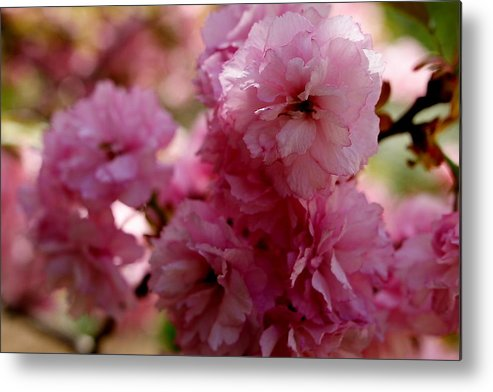 Pink Metal Print featuring the photograph Pretty In Pink by Lisa Jayne Konopka