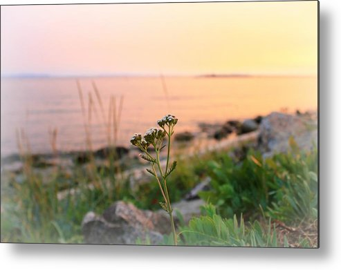 Landscape Metal Print featuring the photograph Pretty In Pink by Margre Flikweert