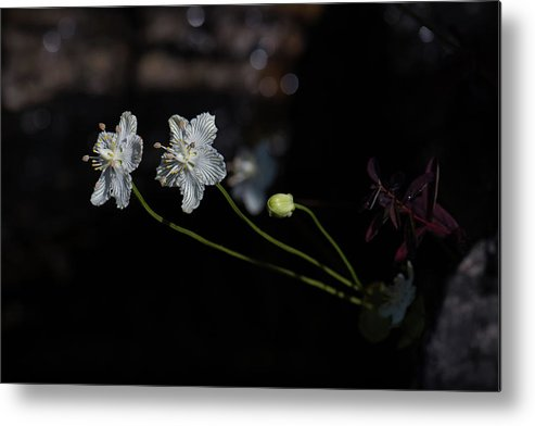 Flowers Metal Print featuring the photograph Pretty Pair by Greg Efner