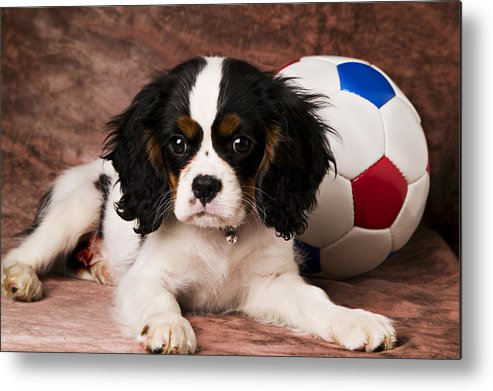 Puppy Dog Cute Doggy Domestic Pup Pet Pedigree Canine Creature Soccer Ball Metal Print featuring the photograph Puppy With Ball by Garry Gay