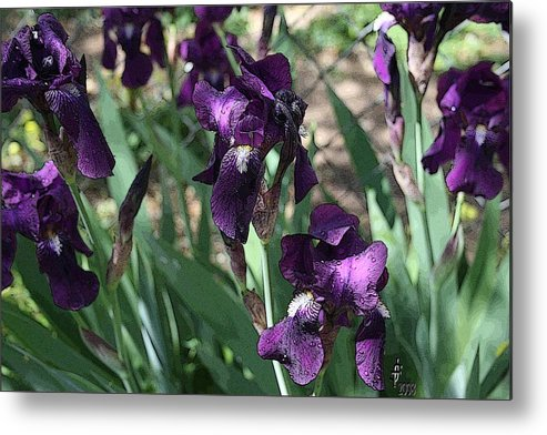 Flowers Metal Print featuring the photograph Purple Majesty by Janey Loree