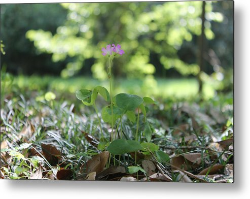 Flower Metal Print featuring the photograph Purple Persists by Laura Martin