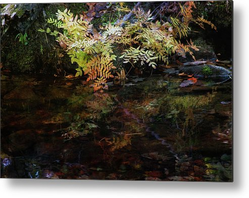 Rainbow Metal Print featuring the photograph Rainbow Pickle Creek Reflections 6272 H_3 by Steven Ward