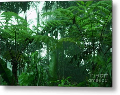 Rain Forest Metal Print featuring the photograph Rainforest by Marie Loh