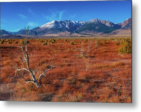 Landscape Metal Print featuring the photograph Read Fields Eastern Sierra by Javier Flores