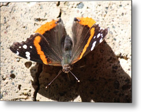 North Metal Print featuring the photograph Red Admiral Close by Nicholas Miller