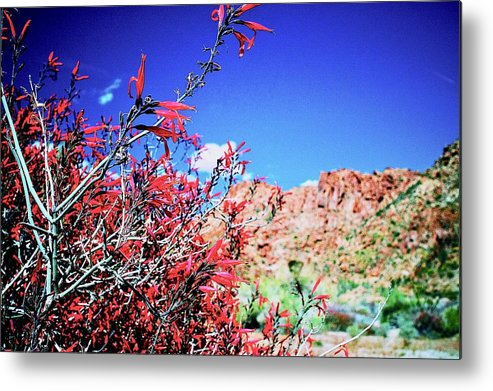 Ajasper Metal Print featuring the photograph Red Bloom by Anna Jasper