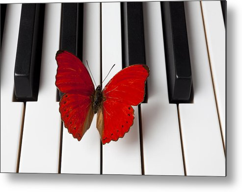 Red Butterfly Metal Print featuring the photograph Red Butterfly On Piano Keys by Garry Gay
