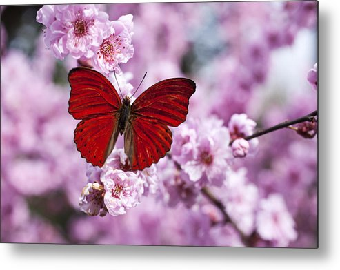 Red Metal Print featuring the photograph Red Butterfly On Plum Blossom Branch by Garry Gay