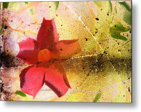 Red Metal Print featuring the photograph Red Floral Grunge by Cassie Peters