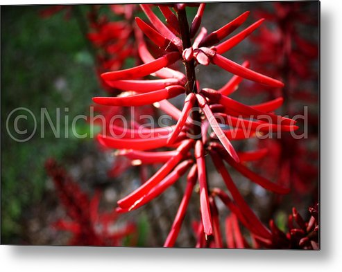 Metal Print featuring the photograph Red Flower Under The Light Of The Setting Sun by Nicholas Seward