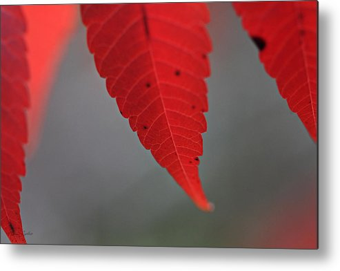 Macro Metal Print featuring the photograph Red II by Nancy Coelho